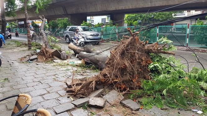 Hải Phòng ngổn ngang cây đổ sau bão số 2 - ảnh 1