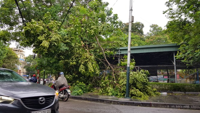 Hải Phòng ngổn ngang cây đổ sau bão số 2 - ảnh 2