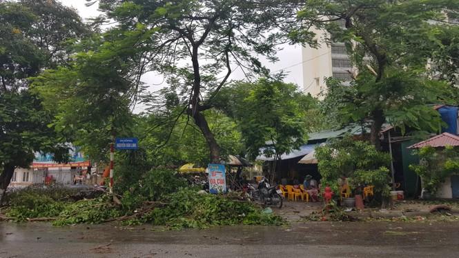 Hải Phòng ngổn ngang cây đổ sau bão số 2 - ảnh 3