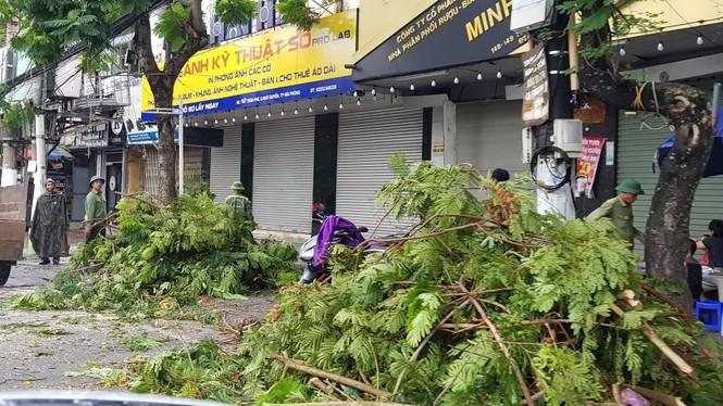 Hải Phòng ngổn ngang cây đổ sau bão số 2 - ảnh 4