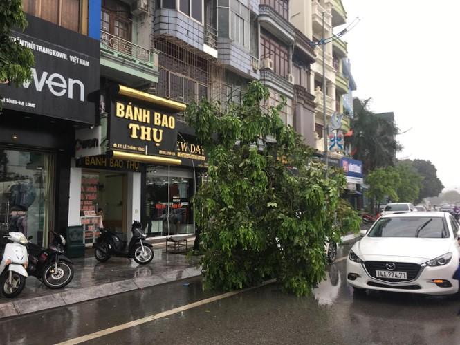 Hải Phòng ngổn ngang cây đổ sau bão số 2 - ảnh 11