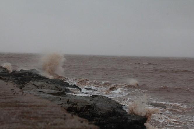 Hải Phòng ngổn ngang cây đổ sau bão số 2 - ảnh 8