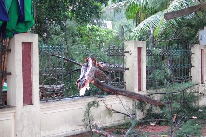 Hải Phòng ngổn ngang cây đổ sau bão số 2 - ảnh 9