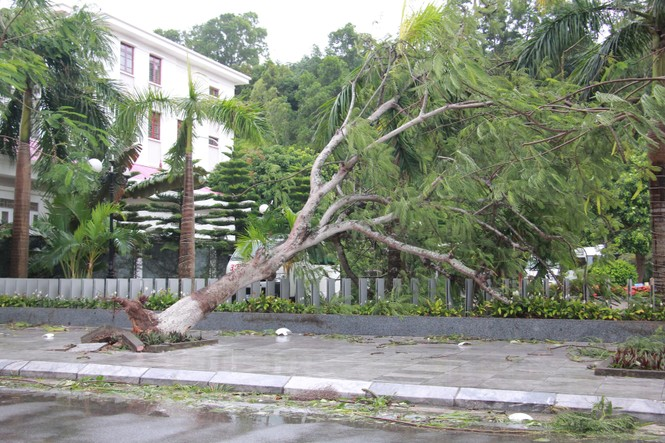Hải Phòng ngổn ngang cây đổ sau bão số 2 - ảnh 6
