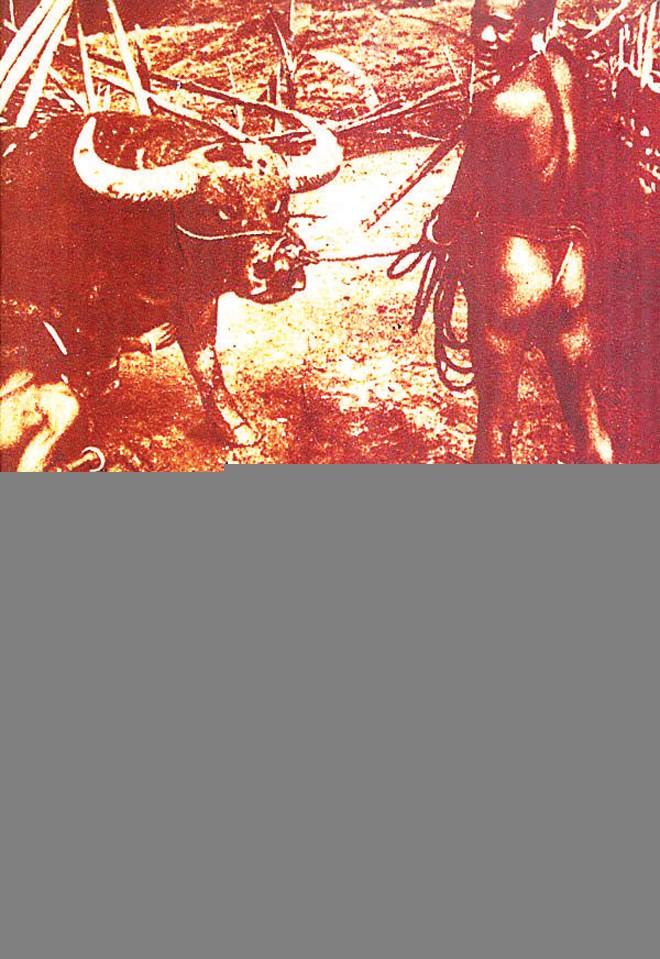 """""""Ăn rừng"""" ở Tây Nguyên - ảnh 3"""