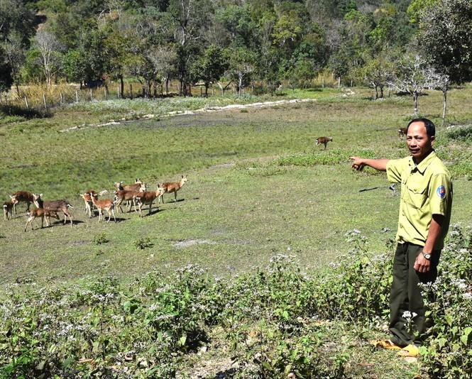 Những thợ săn trả nợ rừng xanh - ảnh 1