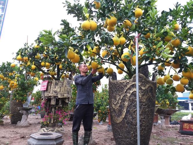 Cây cảnh... lãnh đủ: Ma trận bonsai - ảnh 1