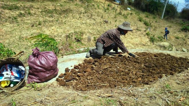 Người dân vùng sâu tăng thu nhập từ nghề nhặt phân bò - ảnh 2