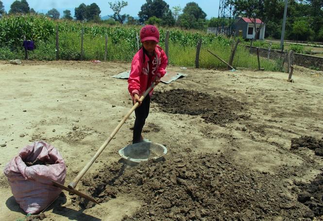 Người dân vùng sâu tăng thu nhập từ nghề nhặt phân bò - ảnh 1