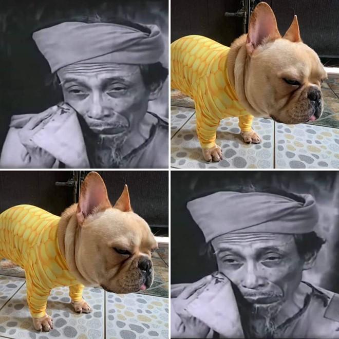 Tranh cãi gay gắt việc chó ngoại quốc vào vai 'Cậu Vàng' của 'Lão Hạc' - ảnh 6