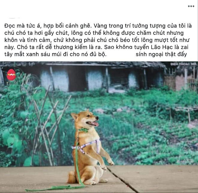 Tranh cãi gay gắt việc chó ngoại quốc vào vai 'Cậu Vàng' của 'Lão Hạc' - ảnh 2