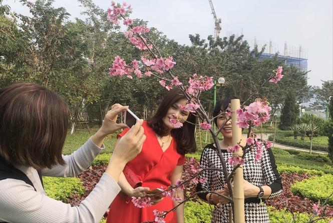 Có một công viên hoa anh đào ở Hà Nội - ảnh 1