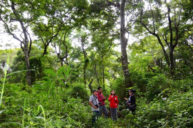 Lội rừng cùng chuyên gia nấm - ảnh 1