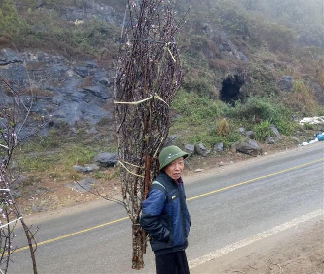 Nông dân ở Bắc Yên, Sơn La đưa đào ra chợ bán
