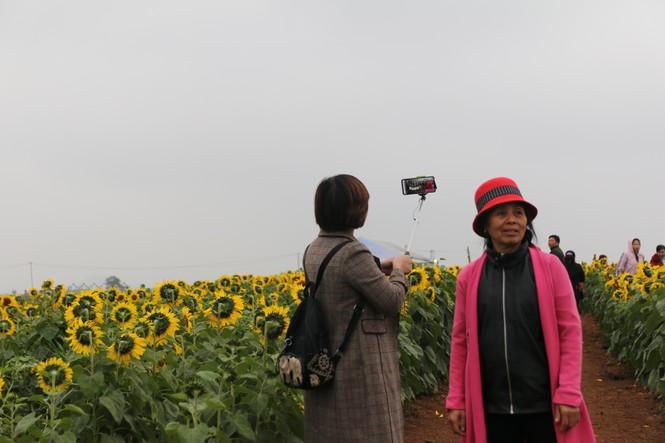 Lễ hội hoa Hướng dương 2019 - ảnh 6