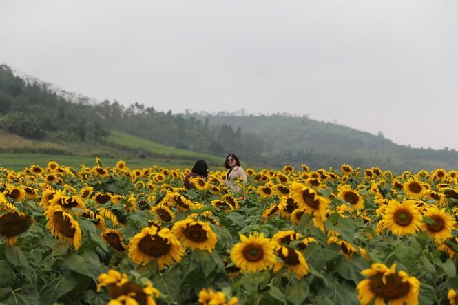 Lễ hội hoa Hướng dương 2019 - ảnh 7