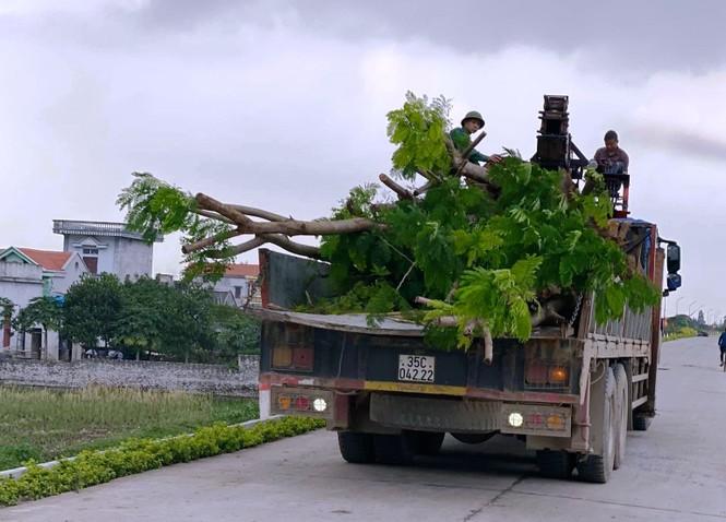 Nhổ toàn bộ cây lâu năm trồng làm khu sinh thái xâm phạm đê sông Đáy ở Ninh Bình - ảnh 2
