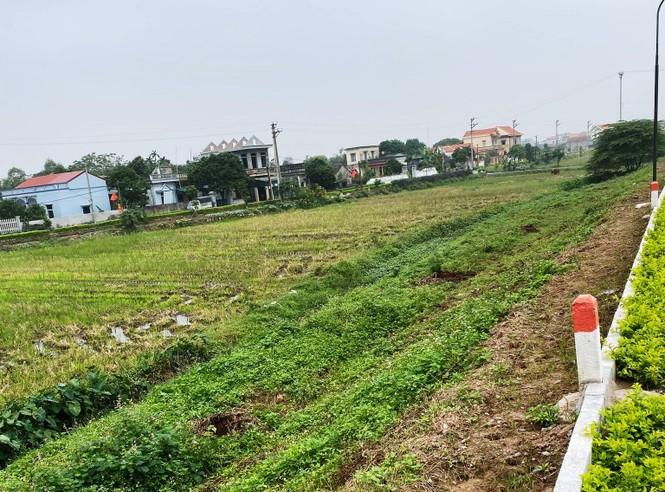Nhổ toàn bộ cây lâu năm trồng làm khu sinh thái xâm phạm đê sông Đáy ở Ninh Bình - ảnh 1