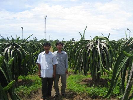 Anh Lê Nguyên Phương (trái) người sử dụng mô hình chong đèn thanh long bằng bóng đèn cao áp 250W đạt hiệu quả ,tiết kiệm điện cao.