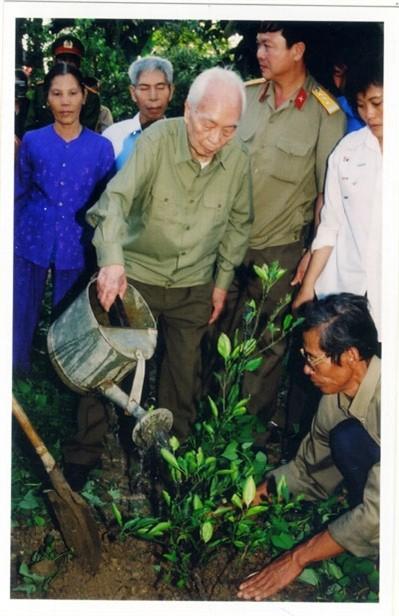 ...và trồng cây xanh