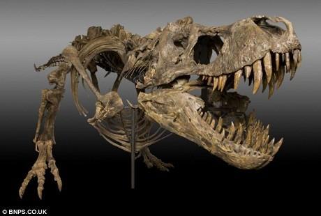 Cận cảnh hàm răng đáng sợ của một con khủng long ăn thịt T-rex