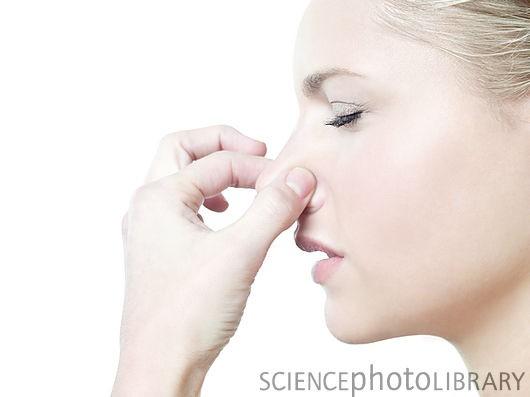Chiếc mũi quyết định sự sống - ảnh 2