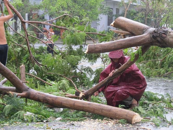 Khẩn trương cưa cây
