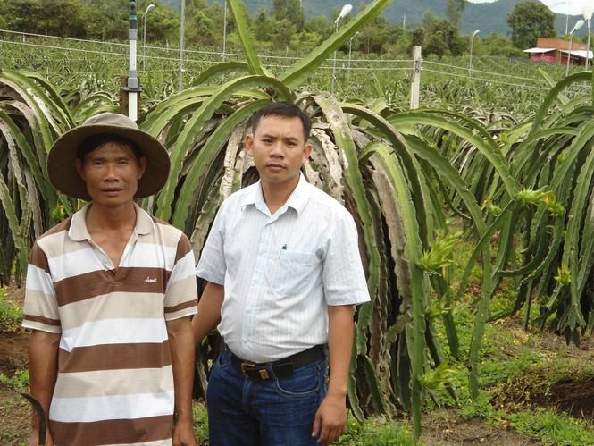 Nguyễn Qúy Thông (phải) và ông Nguyễn Hữu Nghĩa trong khu vườn trồng thanh long sử dụng đèn cao áp của ông Nghĩa