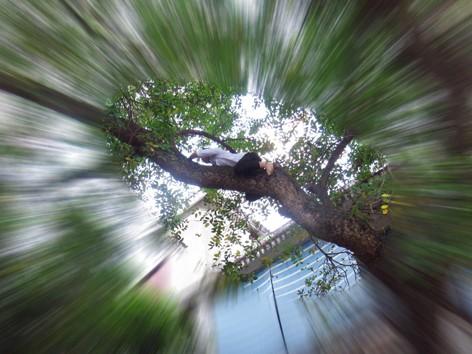 Trần Đảng trèo cây xà cừ cao qua nóc nhà để cứu mèo