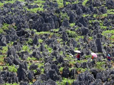 Du lịch địa chất đang có cơ hội phát triển. Ảnh: Việt Hưng
