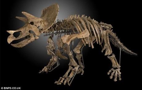 Bộ xương của con khủng long ăn thực vật Triceratop