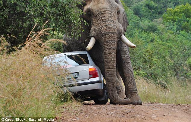 Đi du lịch, bị voi năm tấn húc đổ ôtô - ảnh 3