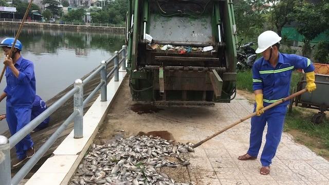 Xác định nguyên nhân hàng tấn cá chết nổi trắng hồ ở Quảng Trị - ảnh 1