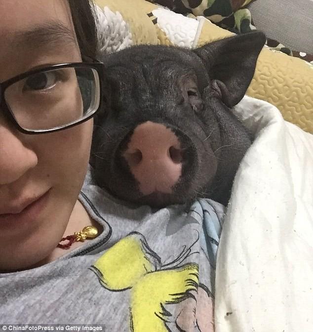 Chồng ghen tỵ vì cô gái suốt ngày ăn ngủ với lợn cưng - ảnh 1