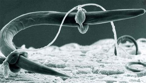 Không ngờ nấm sò là loài ăn thịt và săn mồi theo cách tàn bạo nhất - ảnh 1