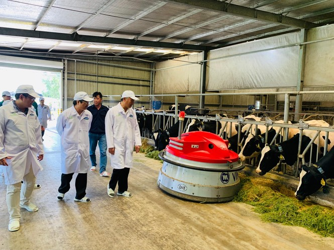 Xây dựng vùng chăn nuôi bò sữa an toàn dịch bệnh để xuất khẩu - ảnh 3