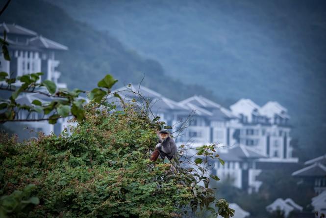 'Điểm danh' bộ sưu tập giải thưởng khủng của khu nghỉ dưỡng tại bán đảo Sơn Trà - ảnh 7