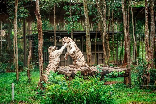 Vinpearl Safari đăng cai tổ chức hội nghị bảo tồn và phúc trạng động vật lớn nhất Đông Nam Á - ảnh 3