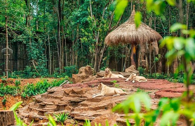 Vinpearl Safari đăng cai tổ chức hội nghị bảo tồn và phúc trạng động vật lớn nhất Đông Nam Á - ảnh 4