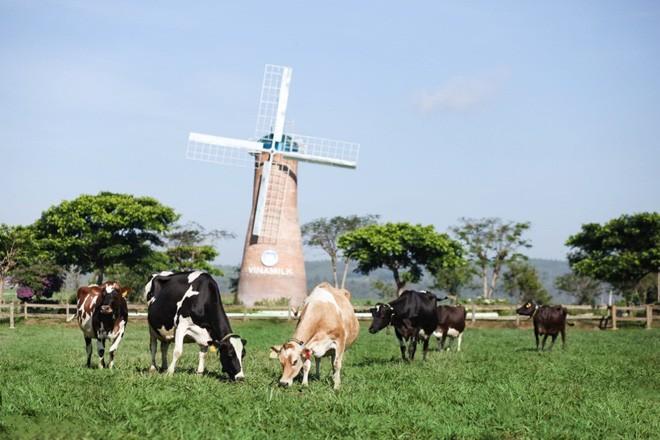 Sữa tươi Ogranic của Vinamilk 'bắt sóng' người tiêu dùng Singapore - ảnh 6
