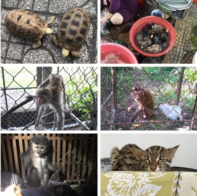 Giải cứu hơn 140 động vật hoang dã quý hiếm - ảnh 1