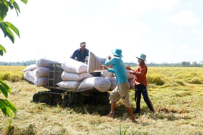 Doanh nghiệp lúa gạo thiếu trầm trọng nguồn nhân lực chất lượng và vốn  - ảnh 2