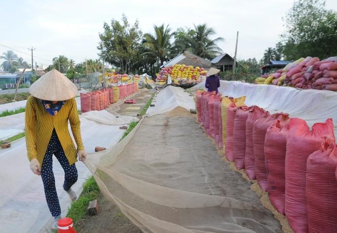 Kiến nghị cho xuất khẩu gạo nếp vì nhu cầu trong nước ít - ảnh 1