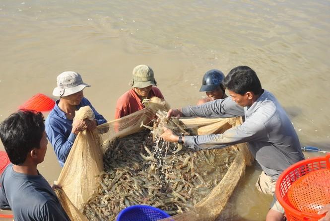 Cơ hội cho ngành thủy sản Việt Nam từ hiệp định EVFTA - ảnh 1