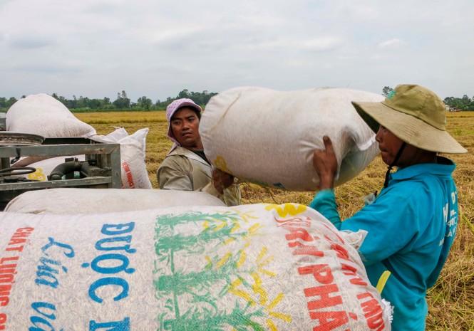 Việt Nam trúng thầu bán 60.000 tấn gạo cho Philippines với giá cao hơn đối thủ - ảnh 1