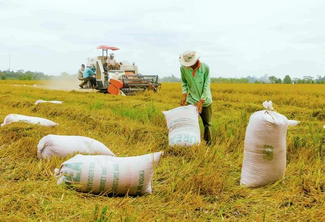 Gạo xuất khẩu tăng mạnh về khối lượng lẫn giá trị - ảnh 1