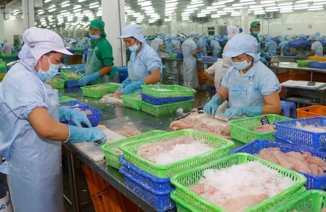 Giá cá tra tăng trở lại sau thời gian dài giảm sâu - ảnh 2