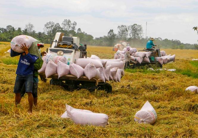 Năm 2020, Việt Nam xuất khẩu hơn 6,1 triệu tấn gạo, giá trị hơn 3 tỷ USD - ảnh 1