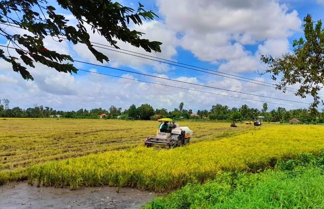 Xuất khẩu gạo 'hạ nhiệt' - ảnh 2