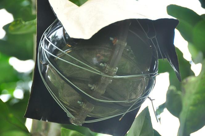 Trái cây độc, lạ rục rịch vào tết - ảnh 6